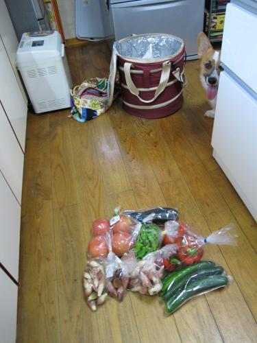 野菜とコギ