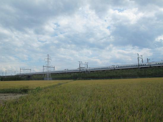 稲穂の海と新幹線
