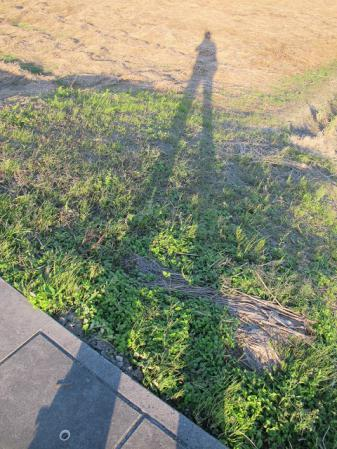 もっと足が長い人と田んぼ