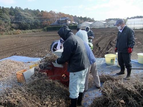 2013.12.7 大豆の脱穀(ファーマーズクラブ) 035