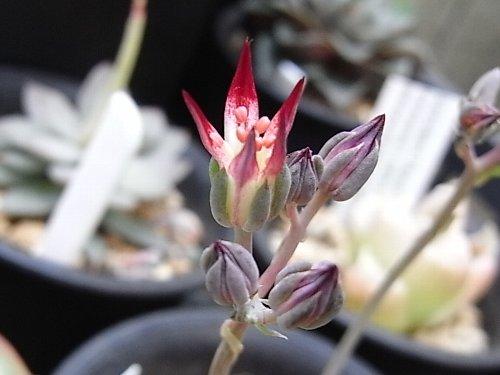菊日和花2