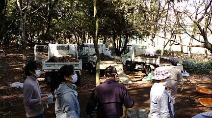 枯葉と土を運ぶためのトラック3台