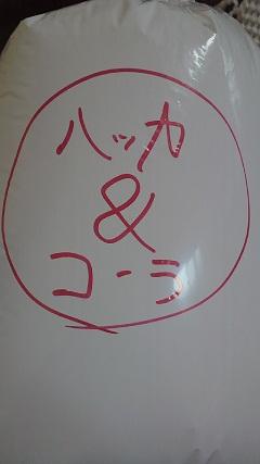 kokka_20130103000154.jpg