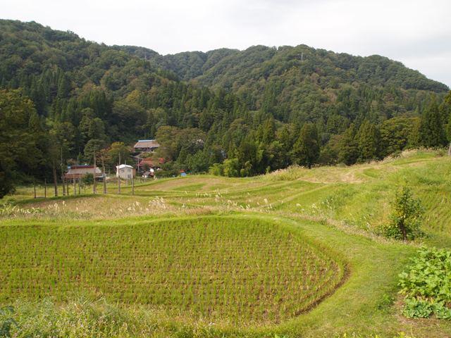 棚田の風景