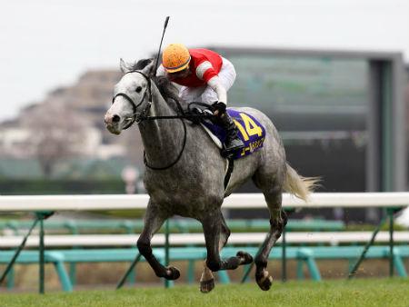 神戸新聞杯◎ゴールドシップ