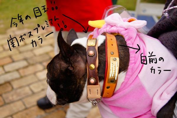 関西ボステリ倶楽部2010秋2 079_edited-1