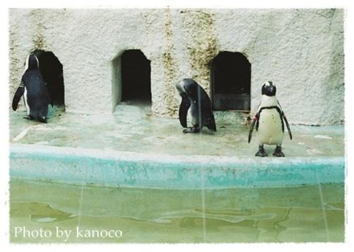 3羽のペンギン