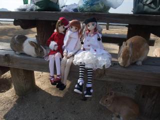うさぎ島2011-01-09
