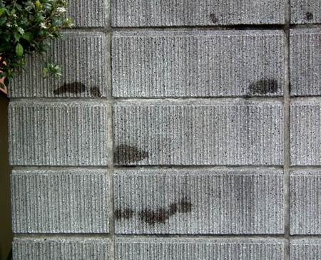 110410薄笑いする犬壁