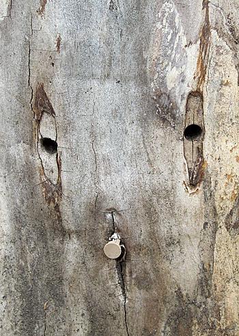 120419おしゃぶりをくわえる木