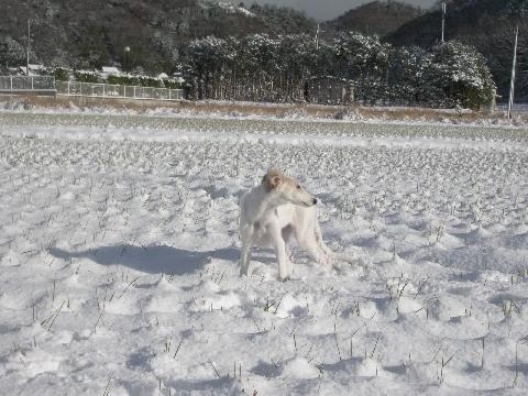 雪に埋もれたたんぼ