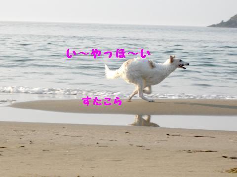IMGP0422_20100407014405.jpg