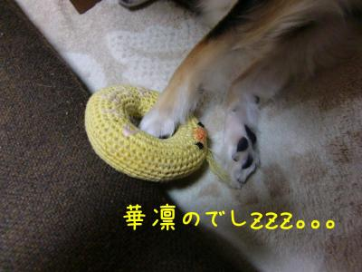 CIMG3021_convert_20100702205509.jpg