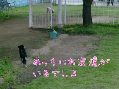 CIMG4511_convert_20100816210921.jpg