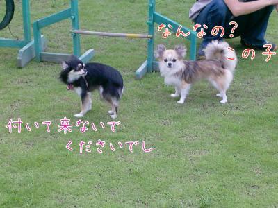 CIMG4534_convert_20100816212405.jpg