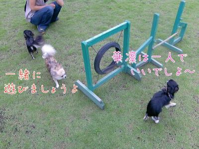 CIMG4536_convert_20100816212452.jpg