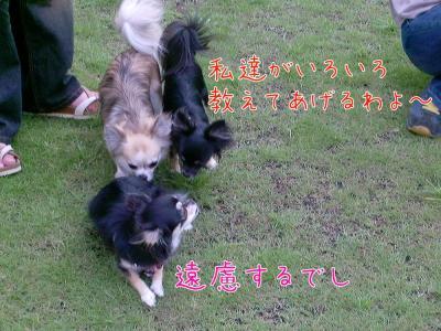 CIMG4537_convert_20100816212654.jpg