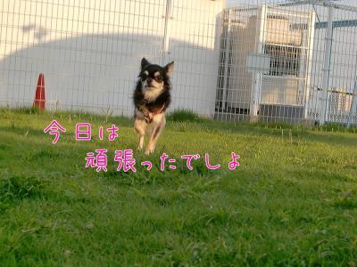 CIMG4963_convert_20100929225350.jpg