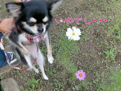 CIMG6401_convert_20101018214653.jpg