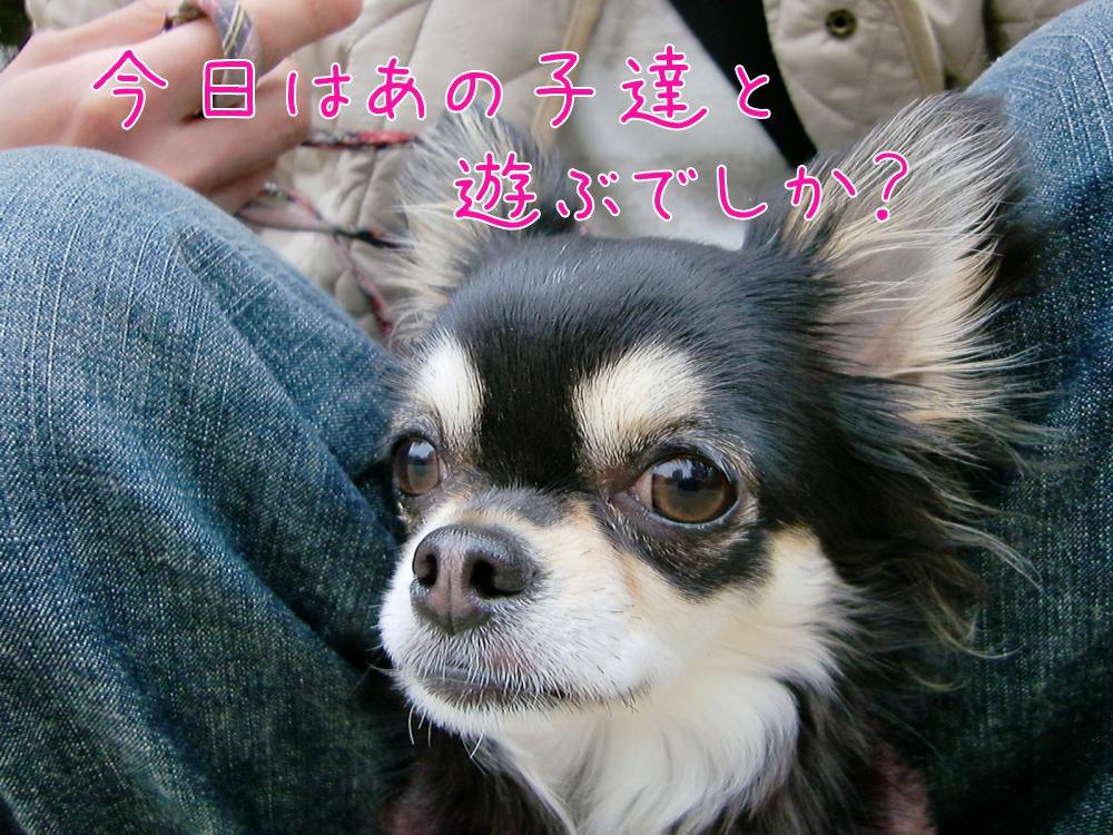 CIMG9185_convert_20110307220929.jpg