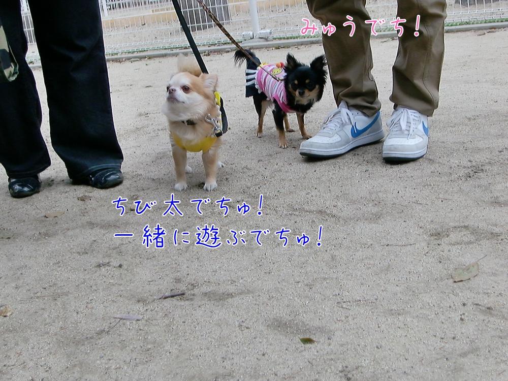 CIMG9187_convert_20110307221007.jpg
