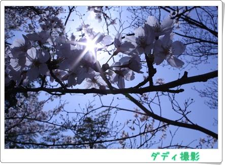 IMG桜6283