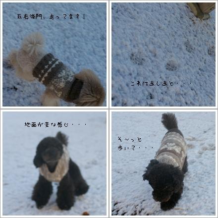 ごえこじ雪