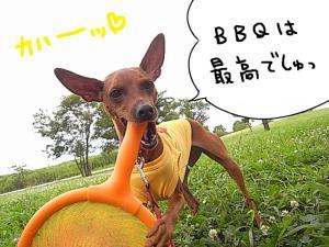 bq12.jpg