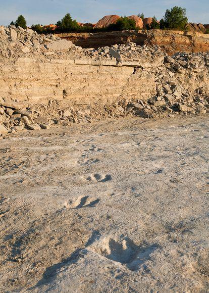 アクロカントサウルスの足跡