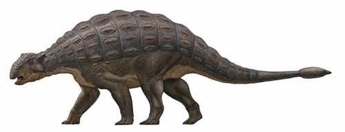 アンキロサウルス04