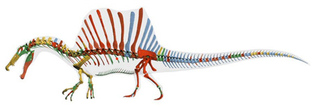 スピノサウルス新復元03