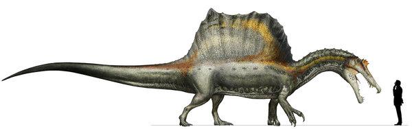 スピノサウルス新復元01