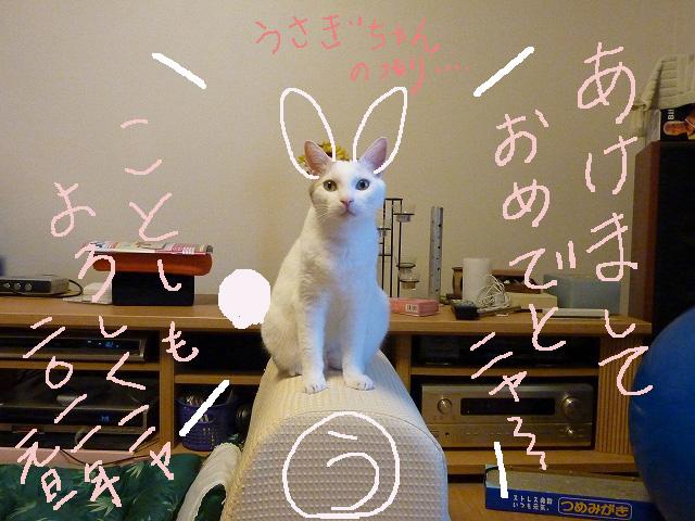 カツラ年賀状ウサギ2
