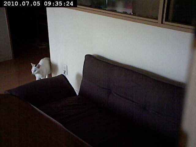 motion-2010-07-05-09-35-24.jpg