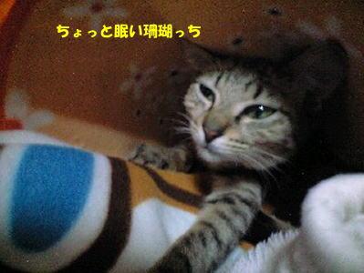 なんだか眠いんだぞ