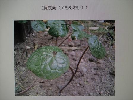 双葉葵 01