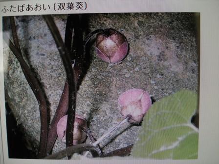 葵双葉 04