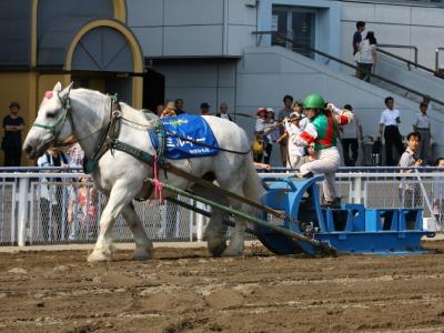 120708川崎競馬オープンデー ばんば本馬場走行2