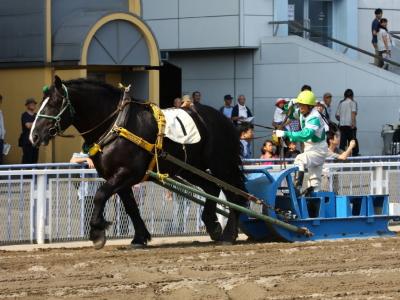 120708川崎競馬オープンデー ばんば本馬場走行1