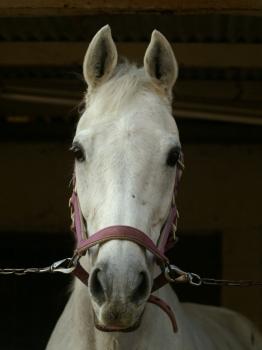130221秦野国際乗馬クラブでのユーコースプリング-090214
