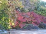 入口を入ると 紅葉の庭
