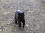 黒猫みかん