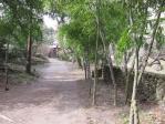 亀甲竹は珍しい