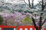 岩根神社から見ると大山祇神社のやねが見える