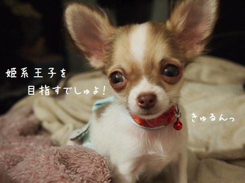 83_20111109111851.jpg