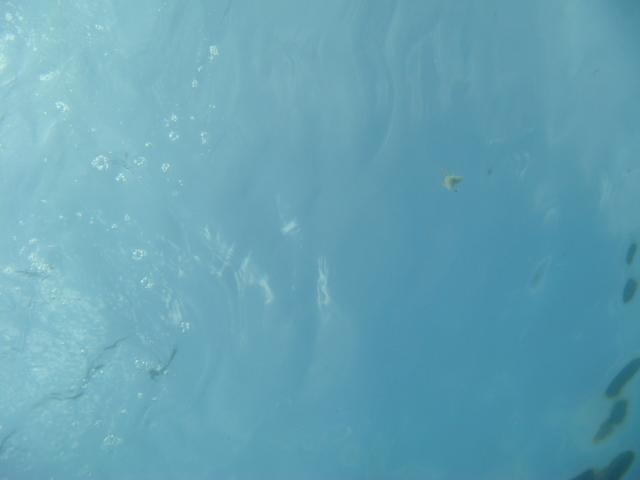 底から見た海