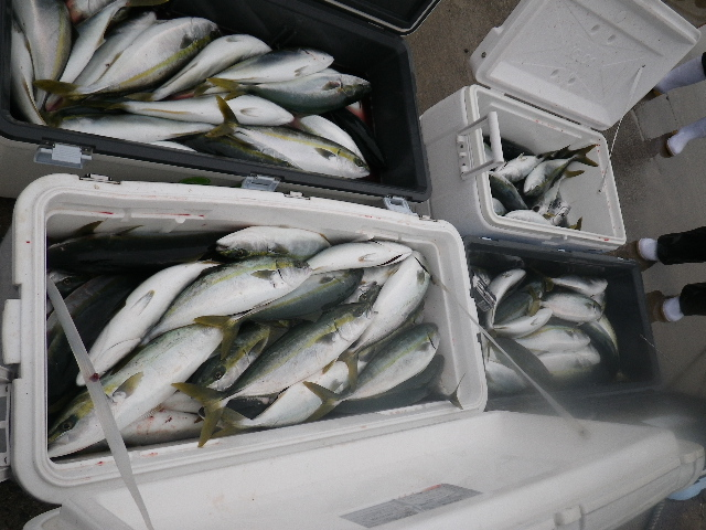 釣果20110103