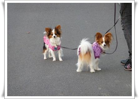 100305_お散歩5