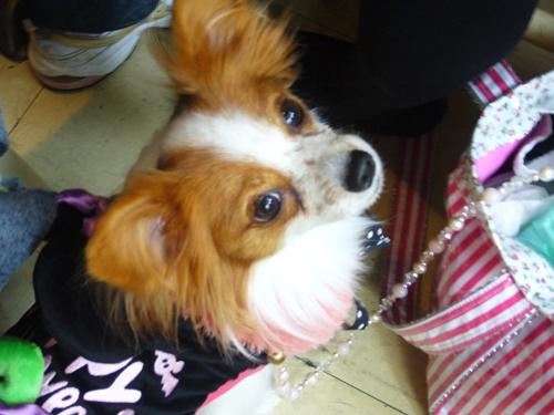 101021_駒沢2