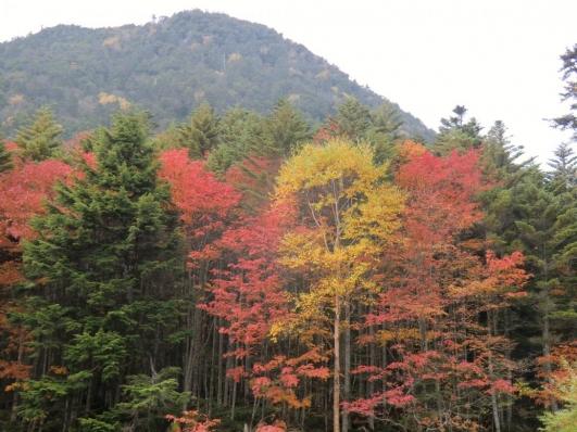 亀甲池の紅葉